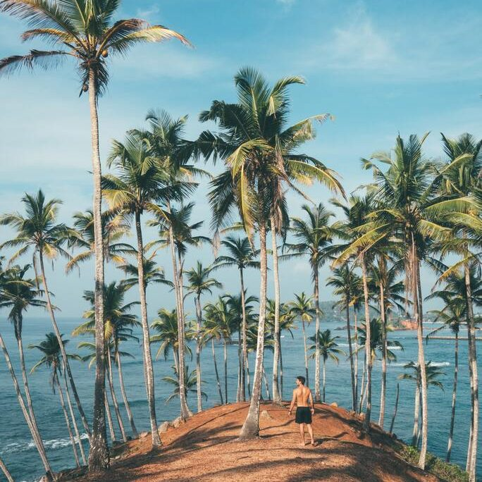 preview-gallery-person-standing-on-dirt-surrounded-by-coconut-trees-1005417